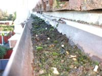 Gutters that need cleaned
